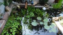 Naturnahe Teichanlagen - Bergmann Galabau
